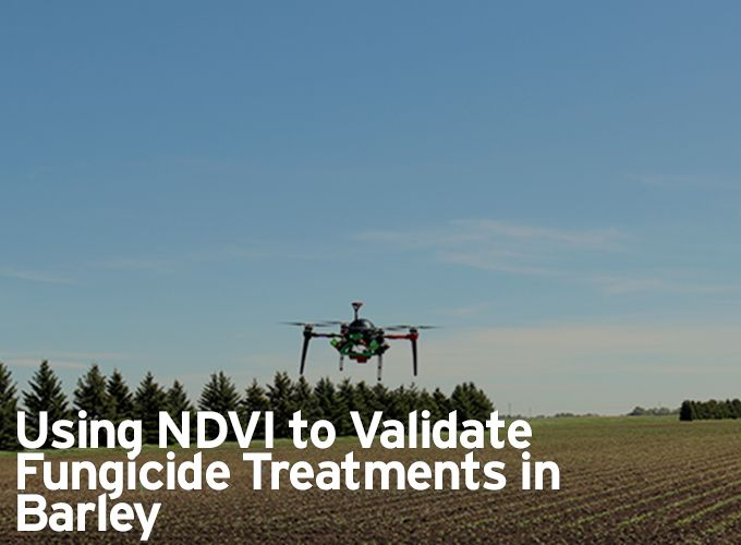 Using NDVI to Validate Fungicide Treatments in Barley