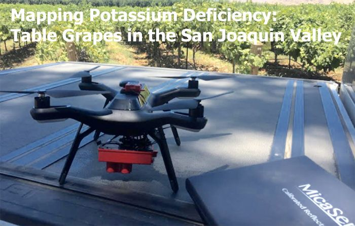 Mapping Potassium Deficiency: Table Grapes in the San Joaquin Valley