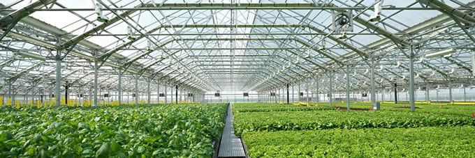 Tradepoint Atlantic Welcomes Gotham Greens To Sparrows Point