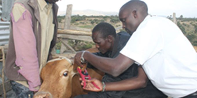 RippleNami Powers Kenya's First Real-time Livestock Traceability Programme Enabling Trade and Food Safety