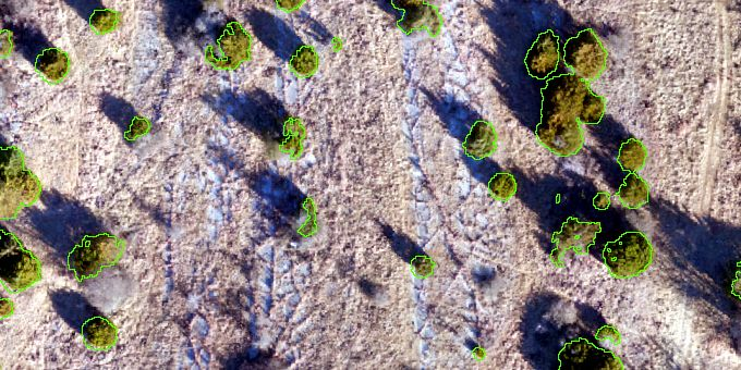 UAV's Application for Cedar Tree Management