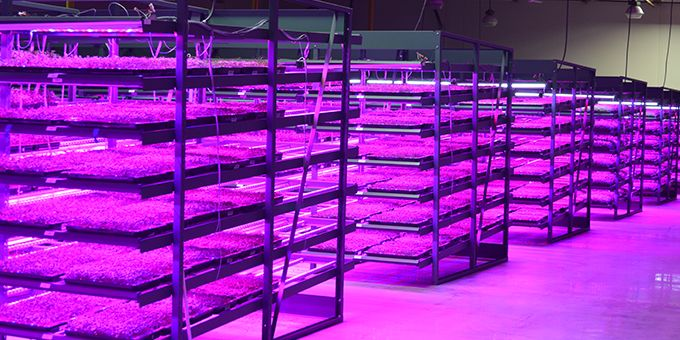 The Growth of Vertical Farms: A Case Study