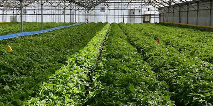 How the Farm Bill impacts Greenhouse and Indoor Growers