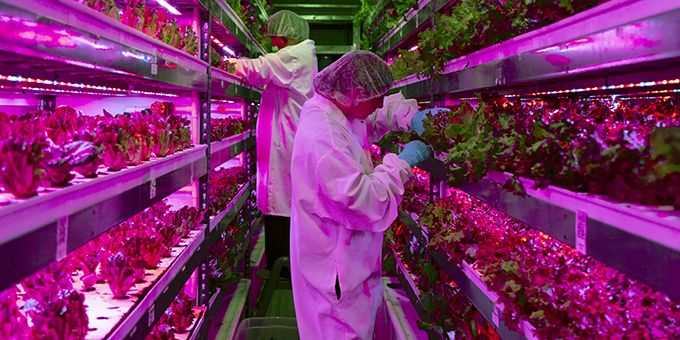 Hydroponic Technology and Data Analytics in Vertical Farming