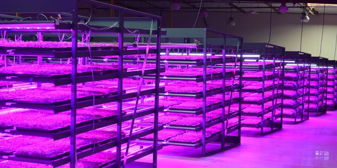 LEDs Have a Growing Impact in Urban Farming