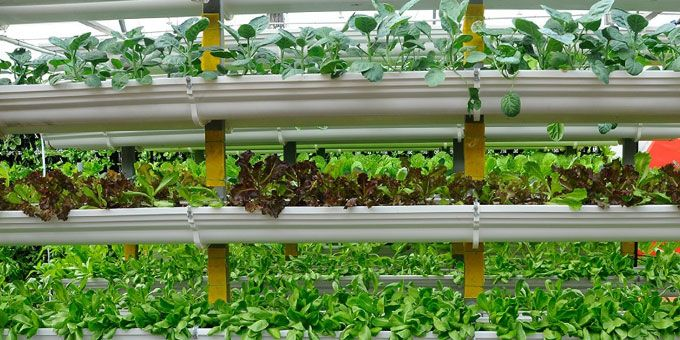 Vertical Farming Methods Compared to Traditional Vertical Farming?
