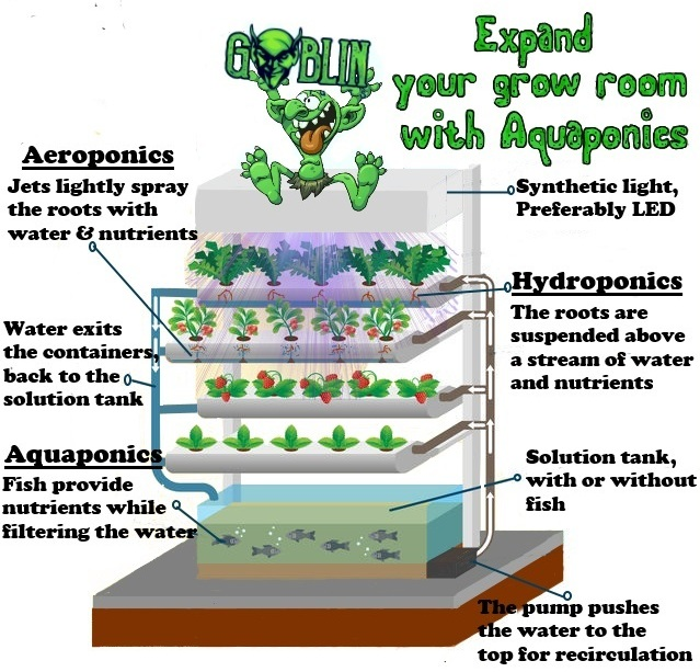 Convert Your Hydroponic System to an Aquaponic System
