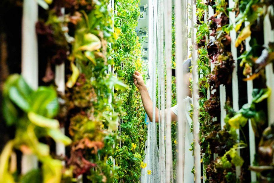 Hammock-Greens-Farming.jpg