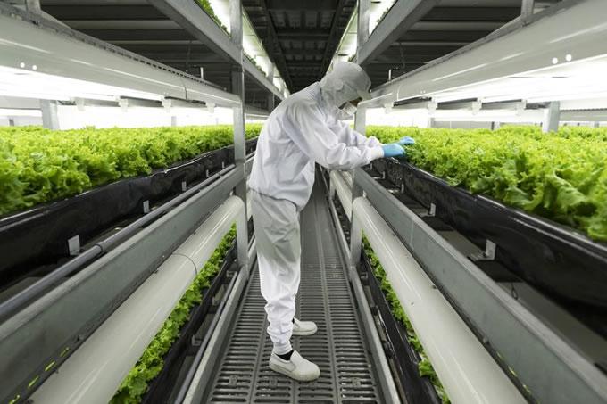 "Techno Farm Keihanna"", the Largest Automated Vertical Farm"
