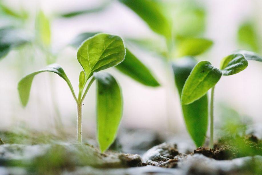 agtech, sensors, soil, seedling